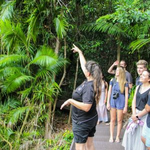 Reef and Daintree on a Budget