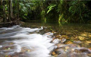 Daintree Rainforest Weather