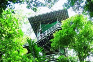 Daintree Visitor Information