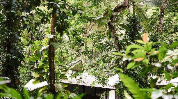 Daintree Eco Lodge